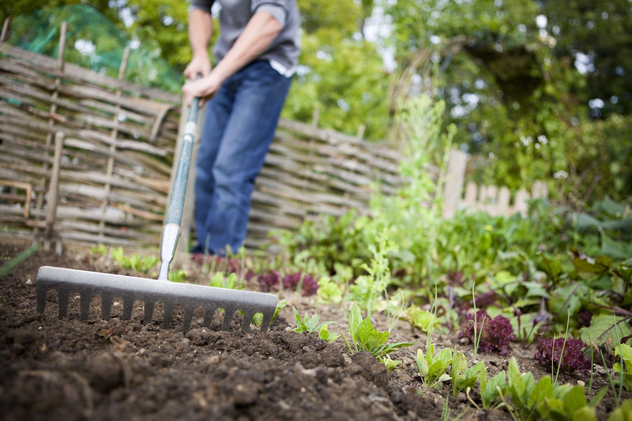 Cosa Seminare A Gennaio come fare un'orto da zero e diventare esperto in orticultura