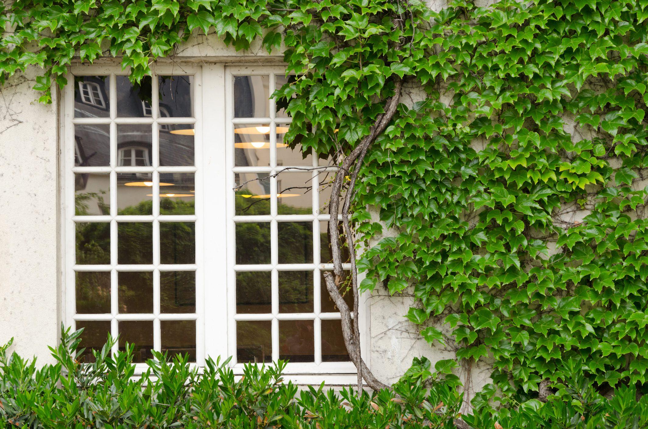 Quando Potare Il Bouganville 5 piante rampicanti profumate da far crescere sul balcone