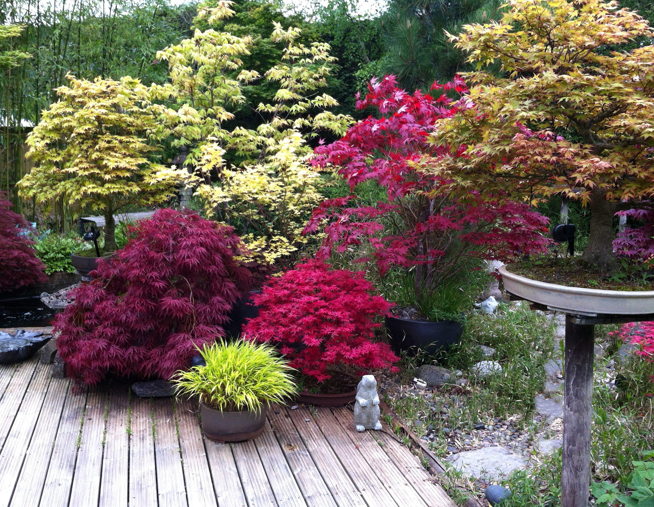 Periodo Migliore Per Potare Quercia creare un bonsai di quercia non è mai stato così facile! | ohga!