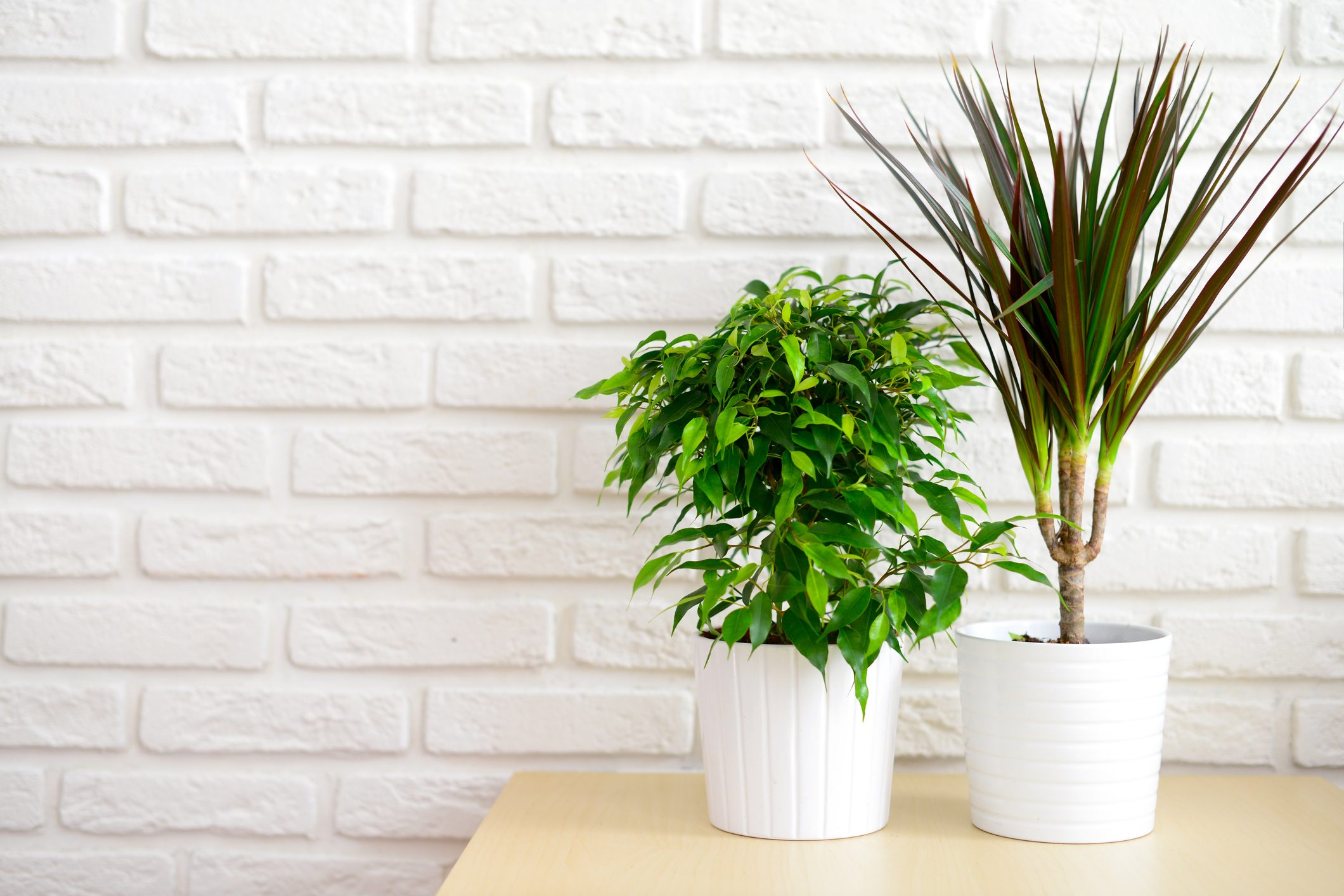 Piante Da Appartamento Per La Salute.Piante Antismog Da Appartamento Ottimo Rimedio Per Combattere Le