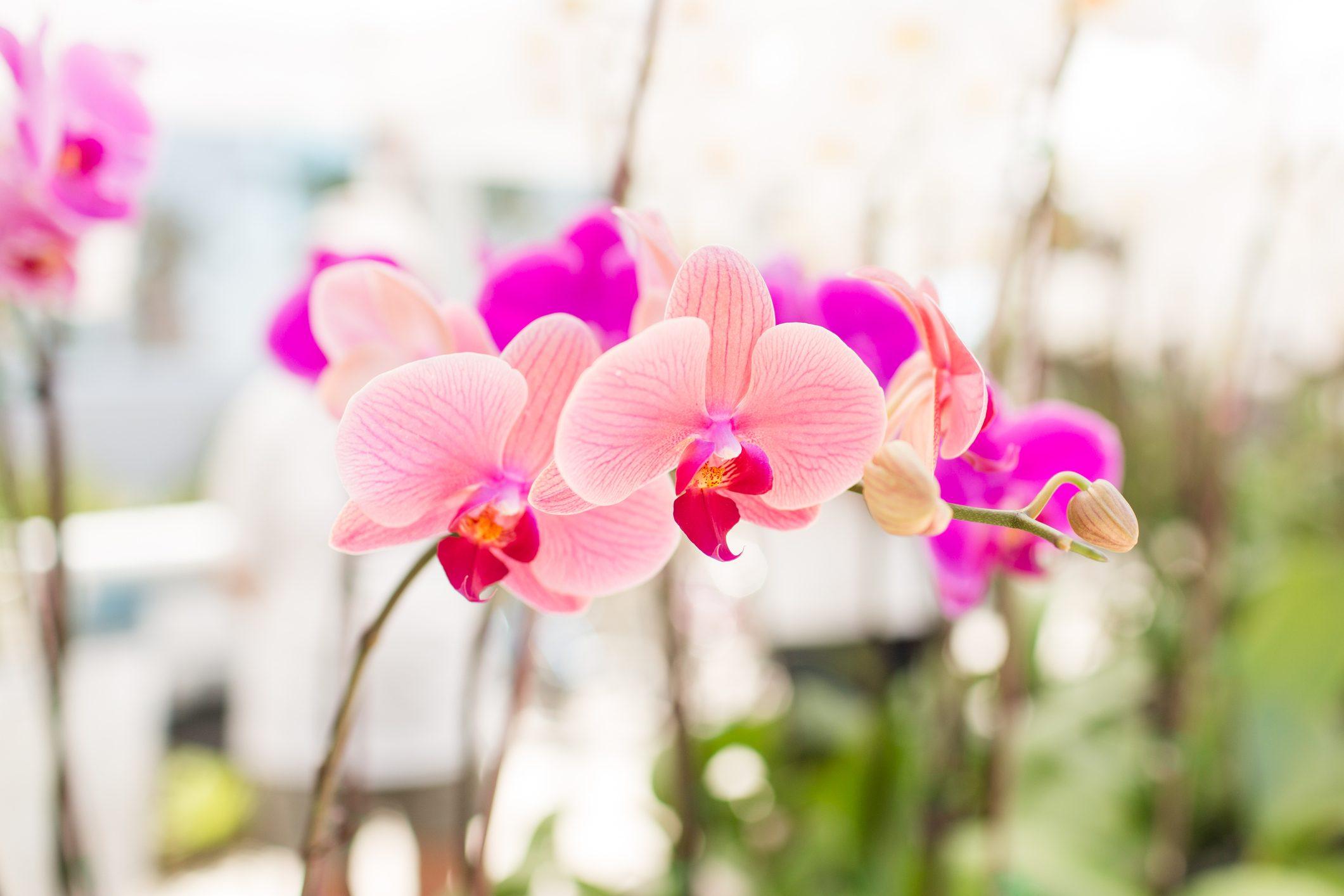 Significato Fiori.Orchidea Il Significato Ohga