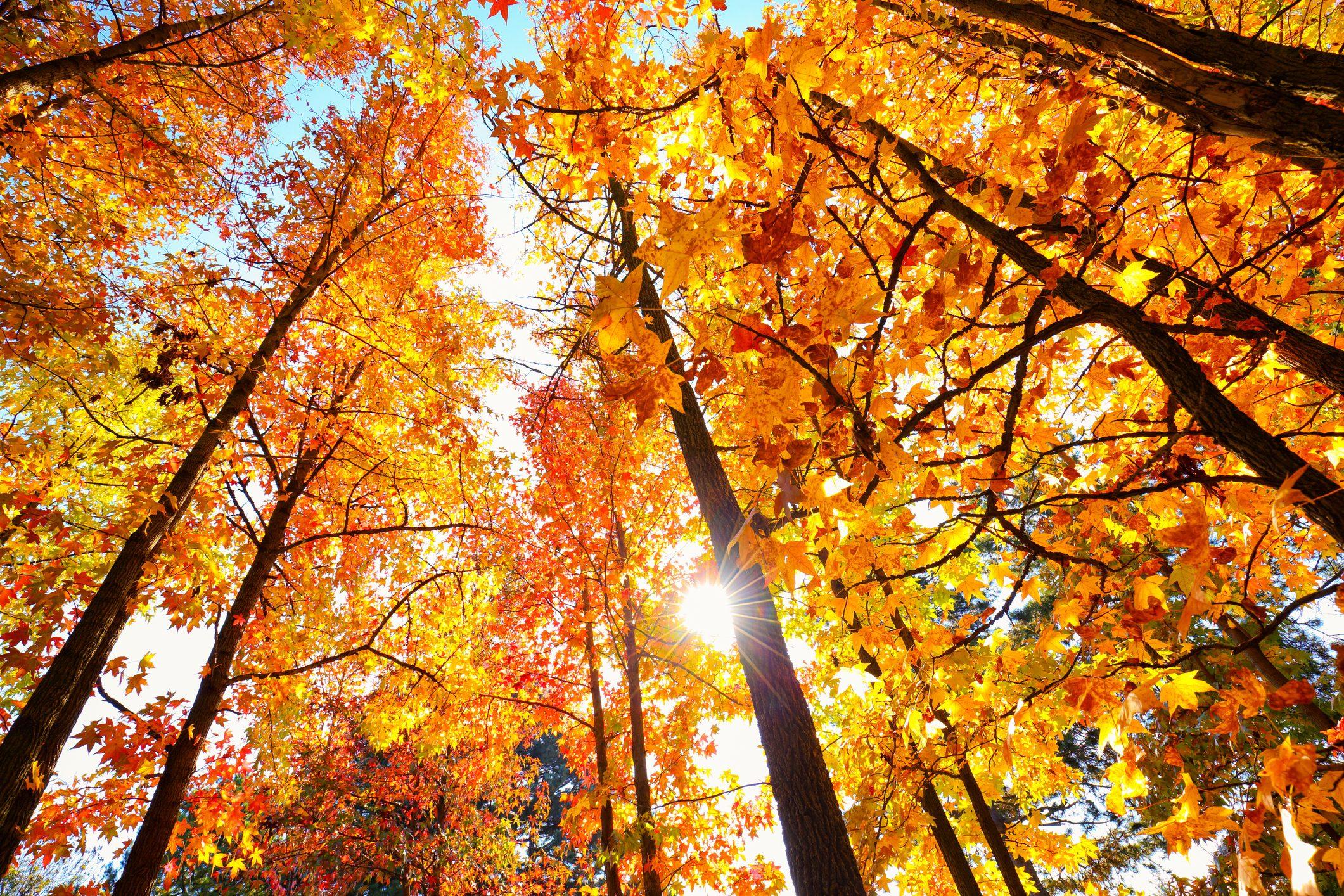 Escursioni in autunno: lo spettacolo del foliage tra le valli e i monti del  Piemonte | Ohga!