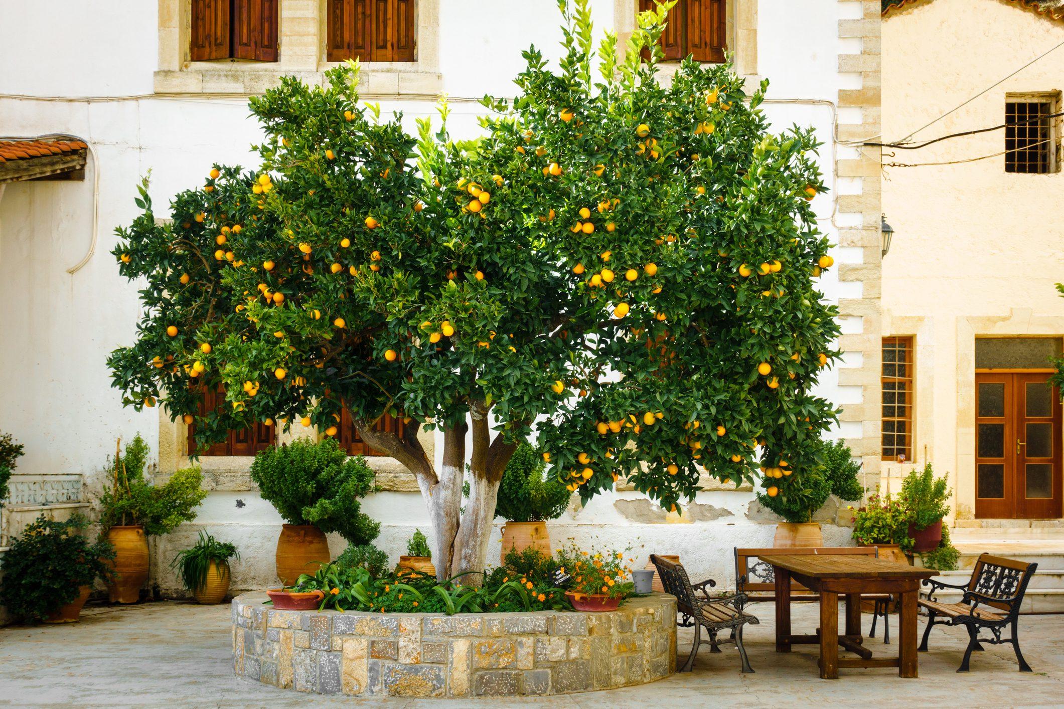 Piccoli Alberi Da Giardino come coltivare l'albero di arancio in giardino, oppure sul