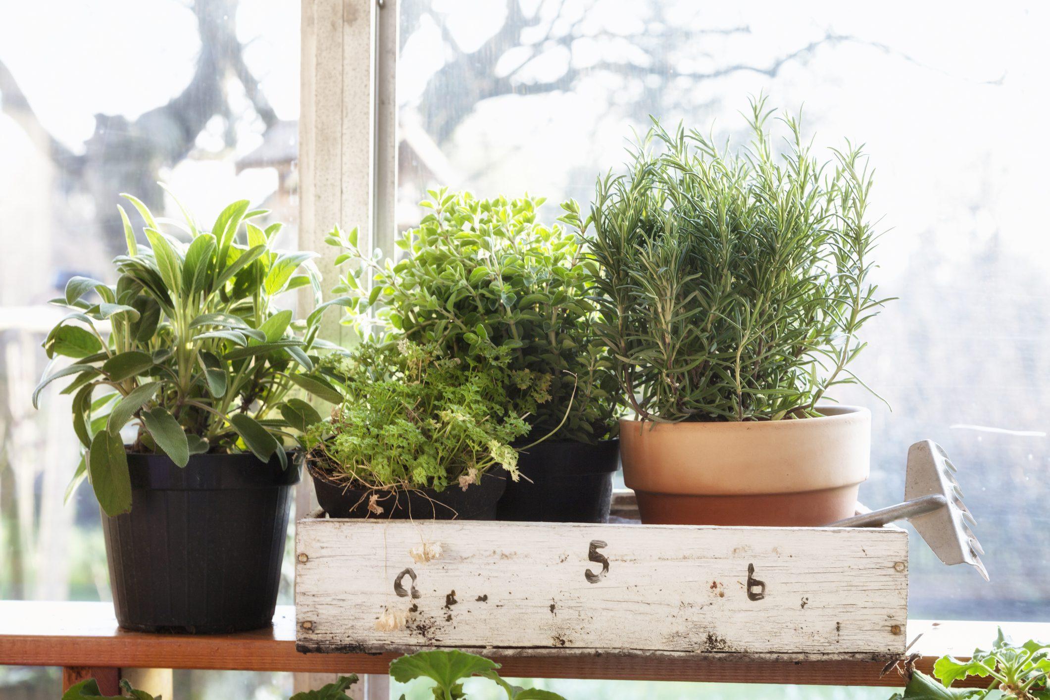 Coltivare In Casa Piante Aromatiche 10 piante aromatiche da coltivare sul tuo balcone | ohga!