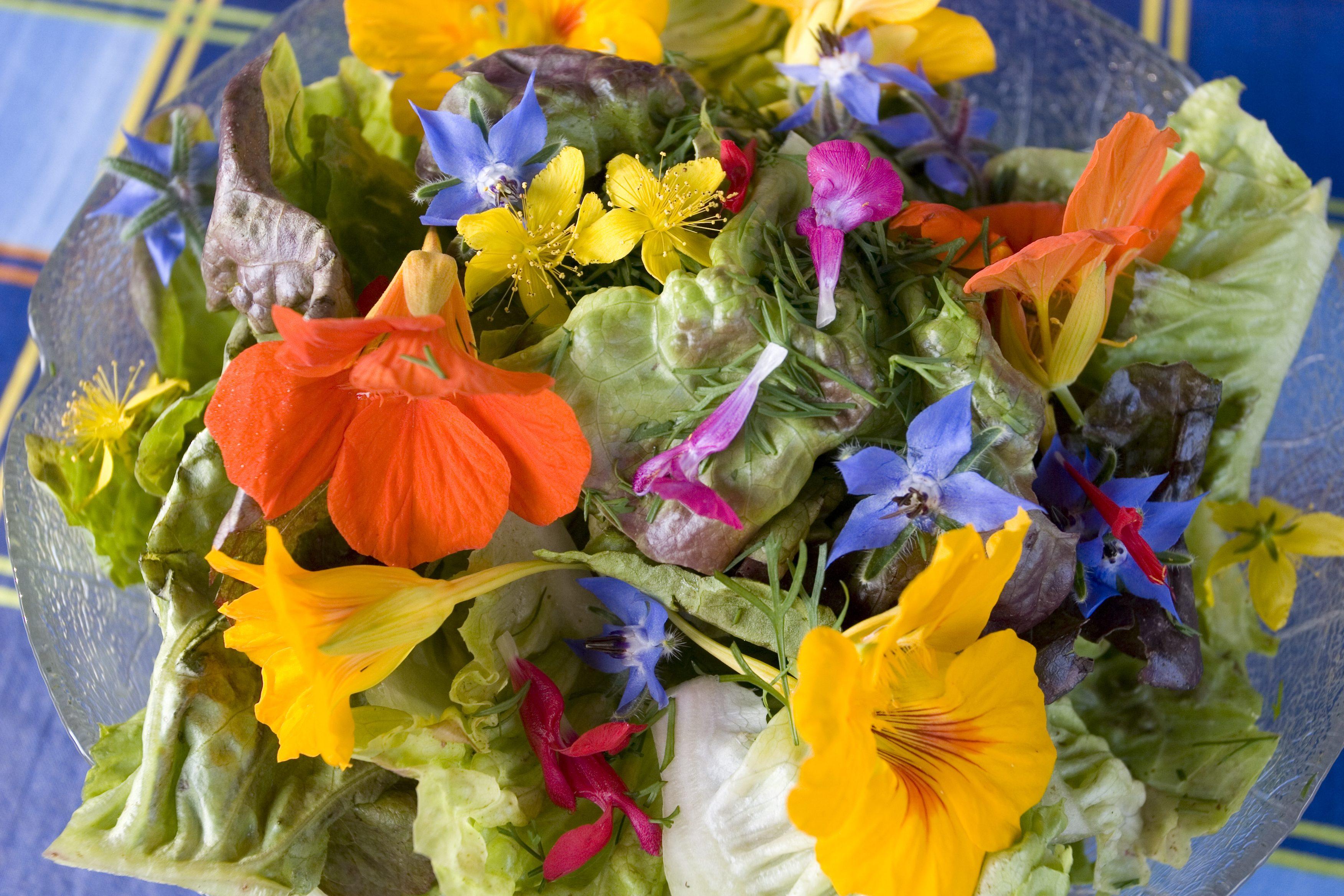Fiori E Piante Commestibili quali fiori si possono mangiare? facciamo la spesa! | ohga!