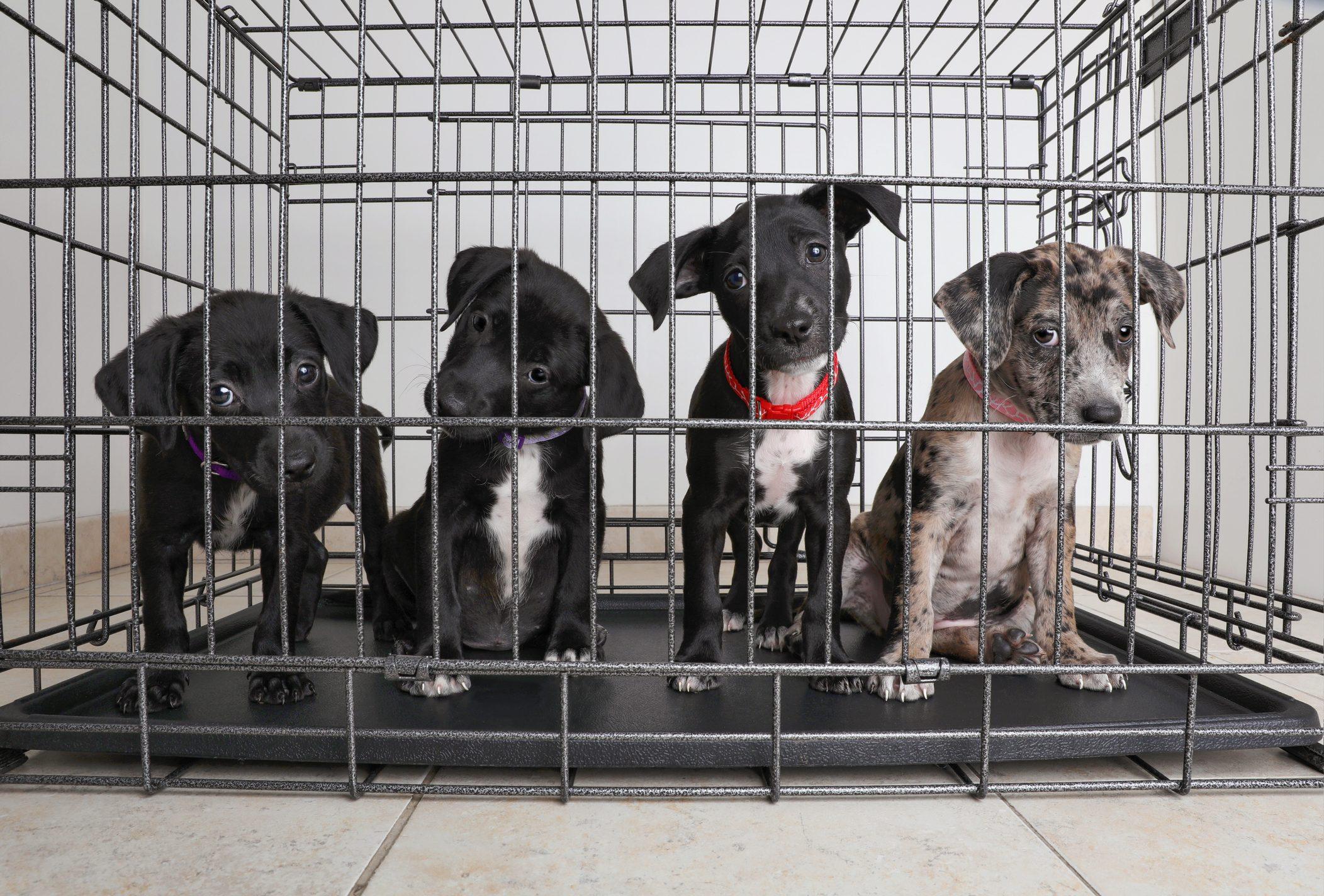 In California Nei Negozi Di Animali Puoi Trovare Solo Cani Gatti E