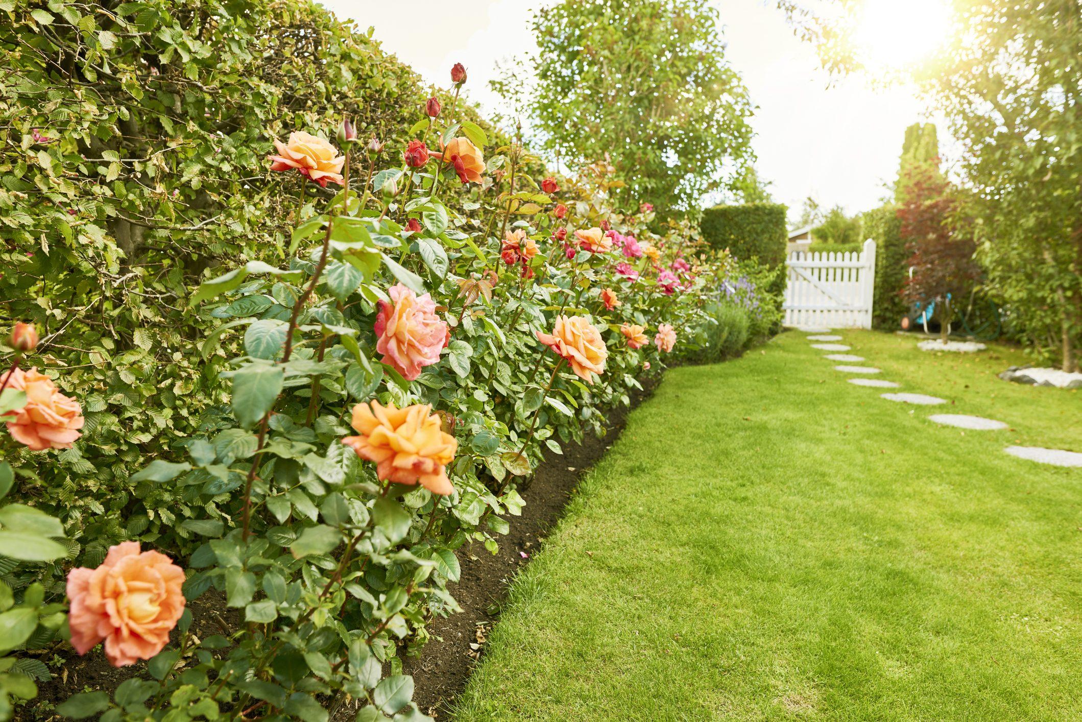 Piante Piccole Da Giardino come curare le rose: in giardino o in vaso, ecco come non