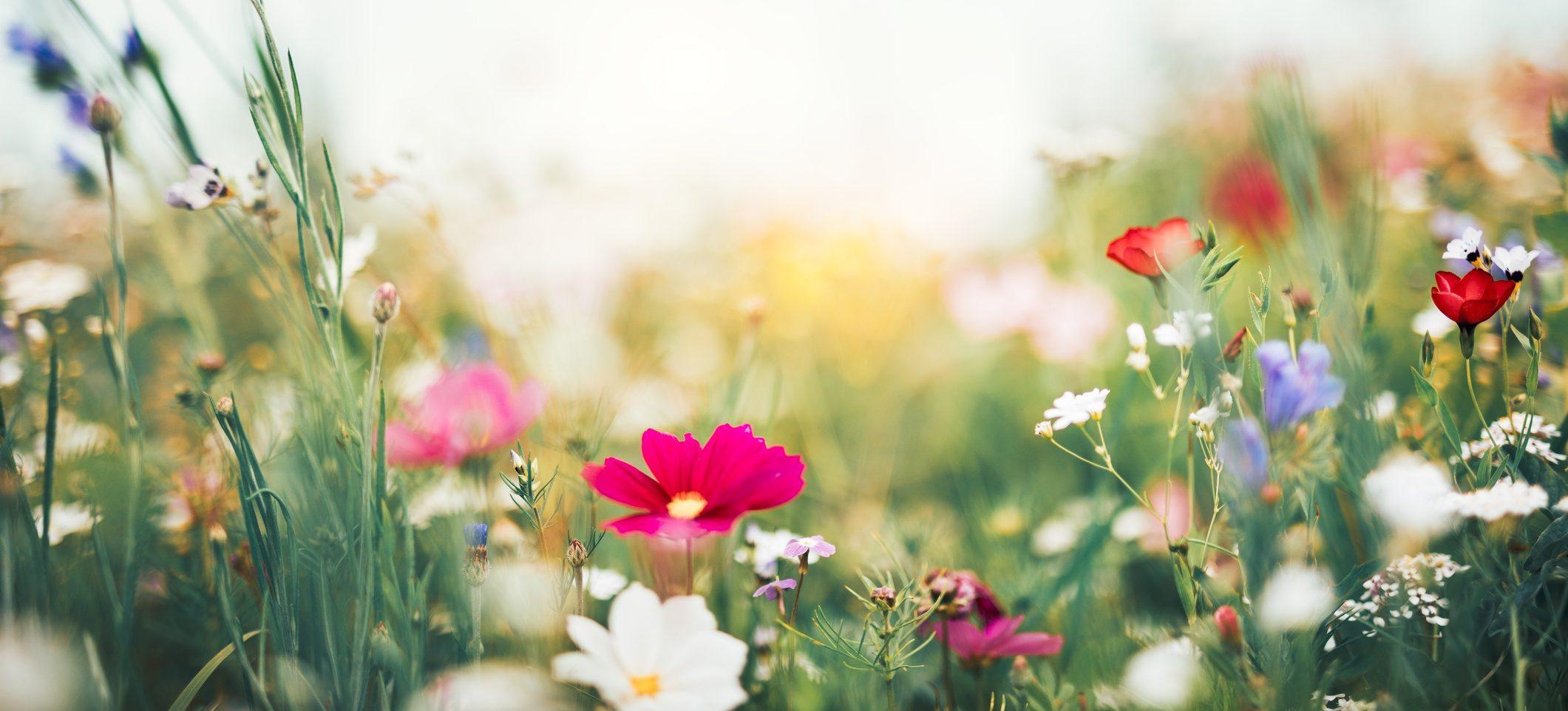 Fiori Da Giardino In Montagna i 10 fiori primaverili che sbocciano quando finisce il