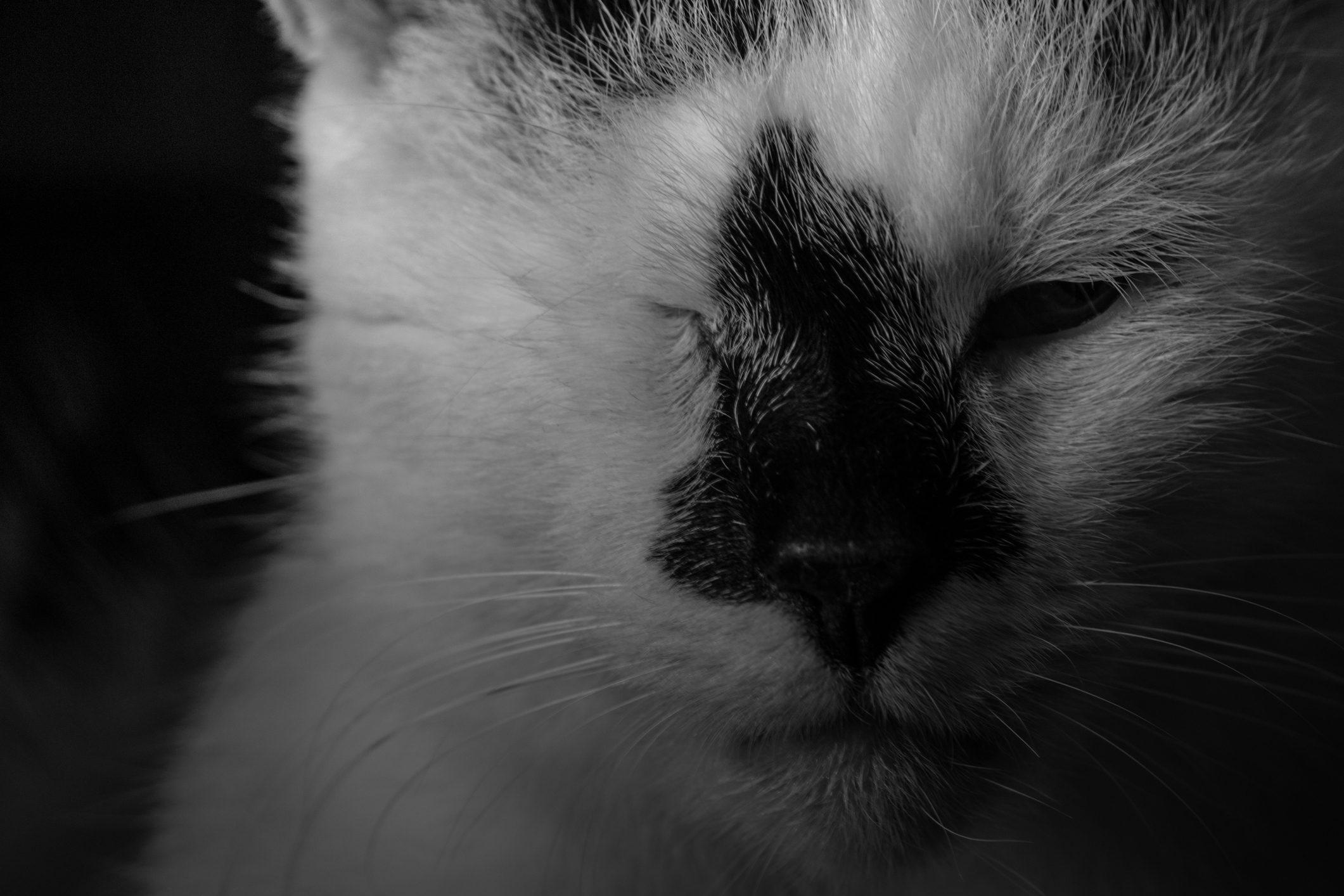 Veronica Di Diversamente Gatto Da Quando Avevo 18 Anni Dedico La