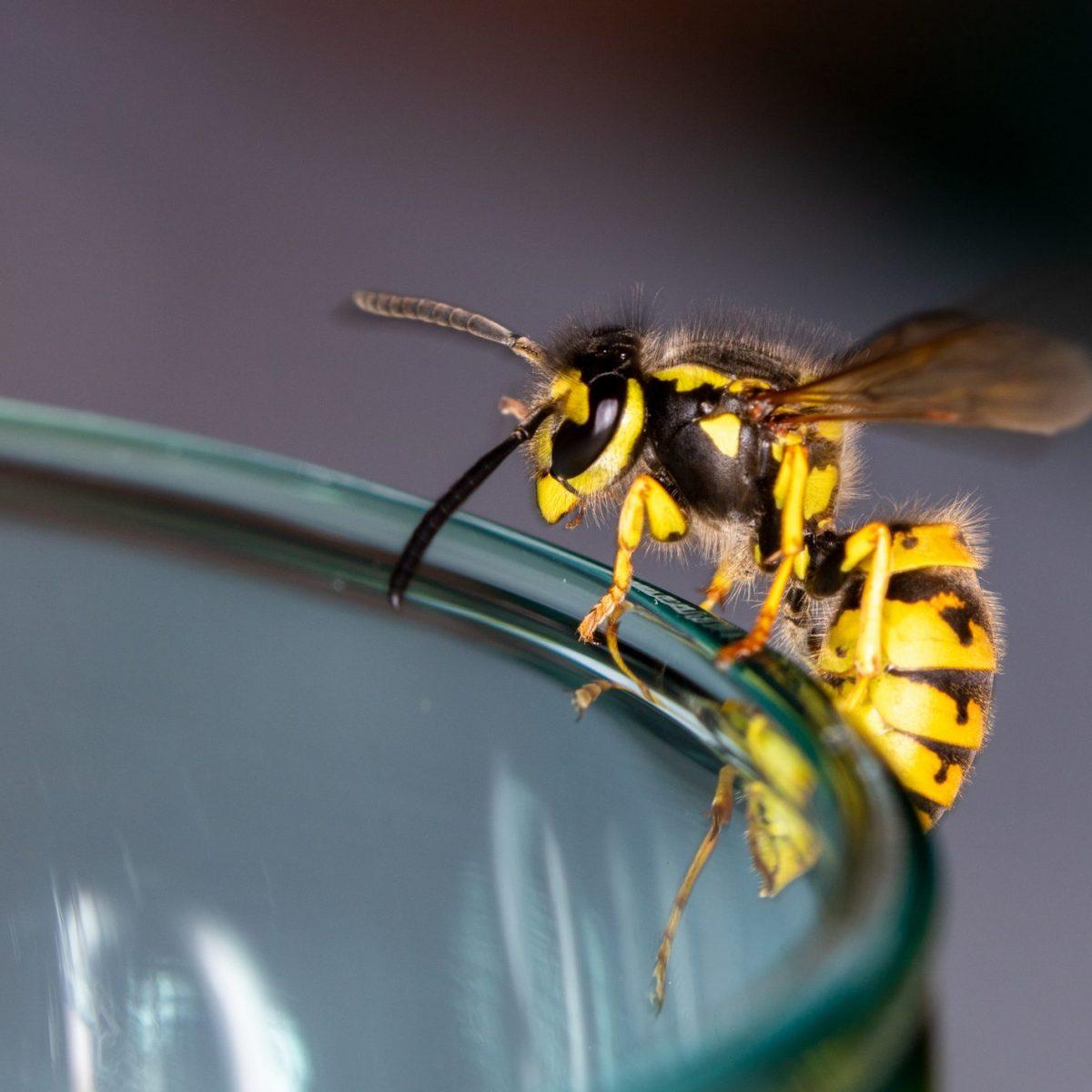Repellente Naturale Per Vespe rimedi naturali contro le vespe: dal caffè al cetriolo, gli