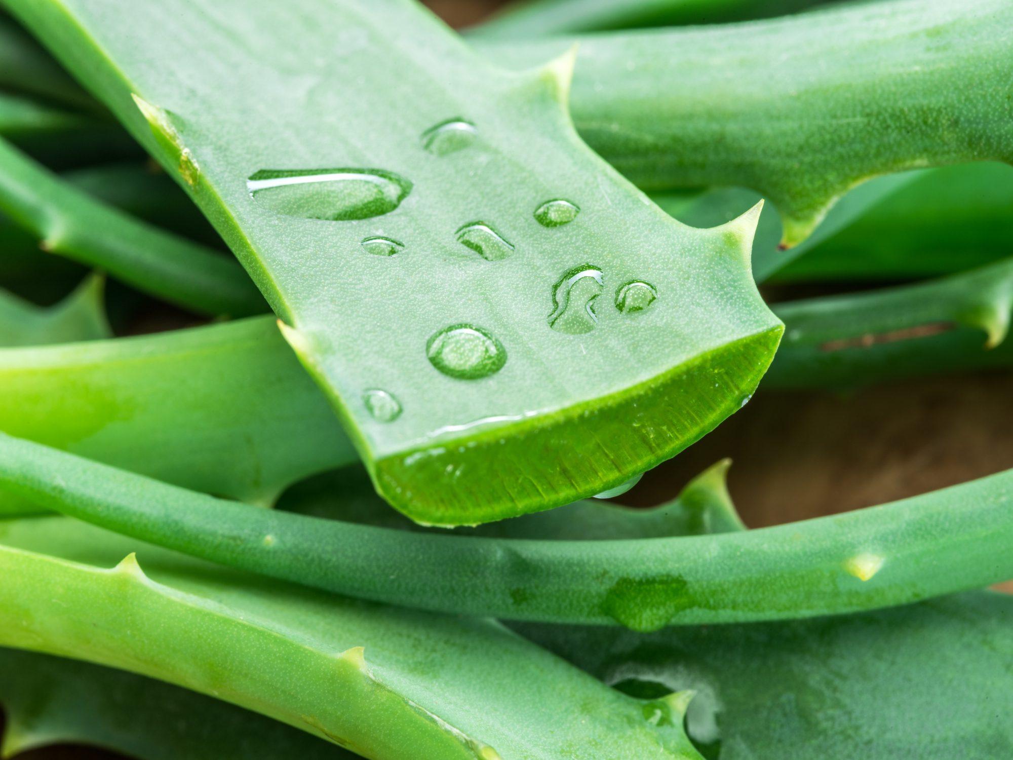 the best attitude separation shoes better Aloe vera: i 9 rimedi naturali | Ohga!