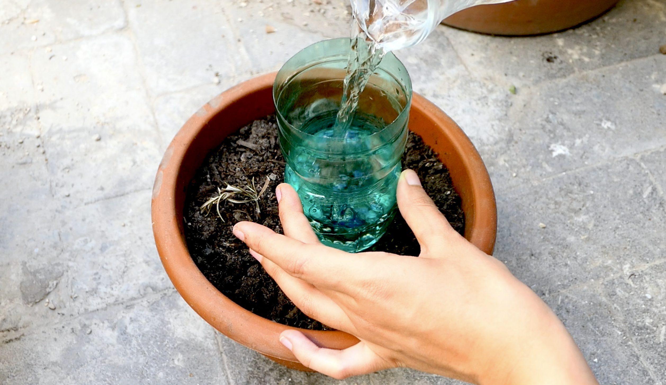 Bagnare Piante Con Bottiglie tre modi fai da te per annaffiare le piante quando sei in vacanza