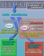 Medicine per il mal di schiena: i farmaci e i rimedi - Ohga!