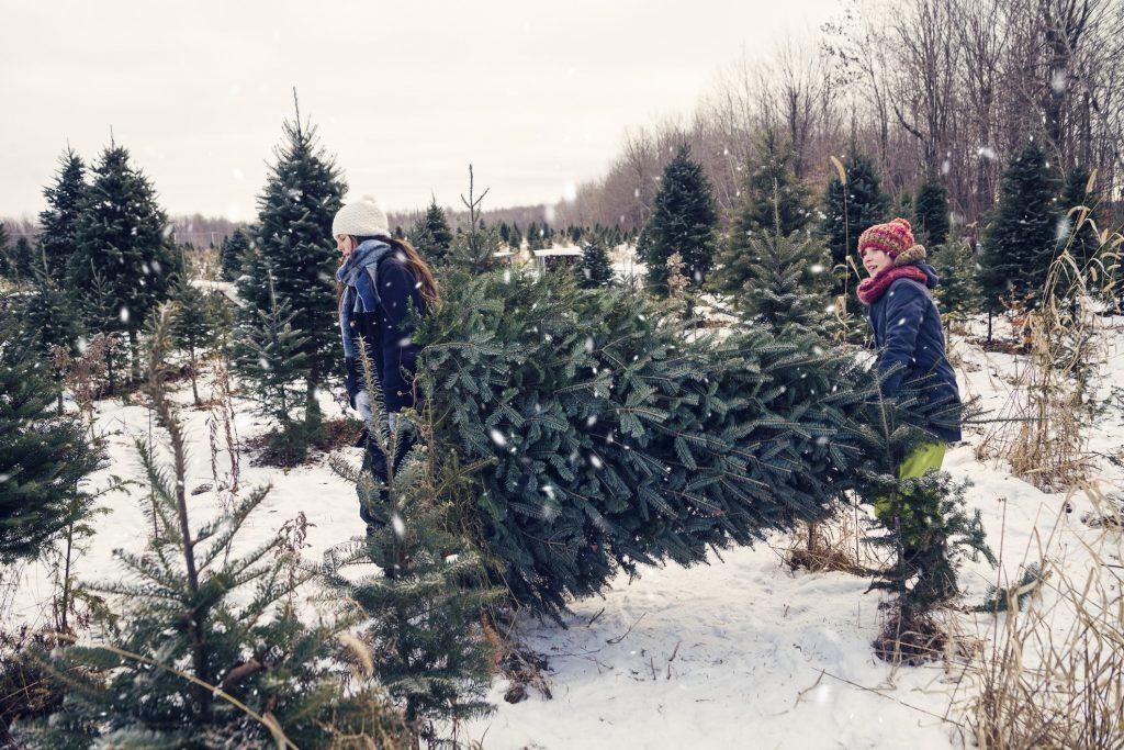 Albero Di Natale Vero Prezzo.Albero Di Natale Vero O Finto Scegli Di Vivere Una Vigilia Sostenibile Ohga