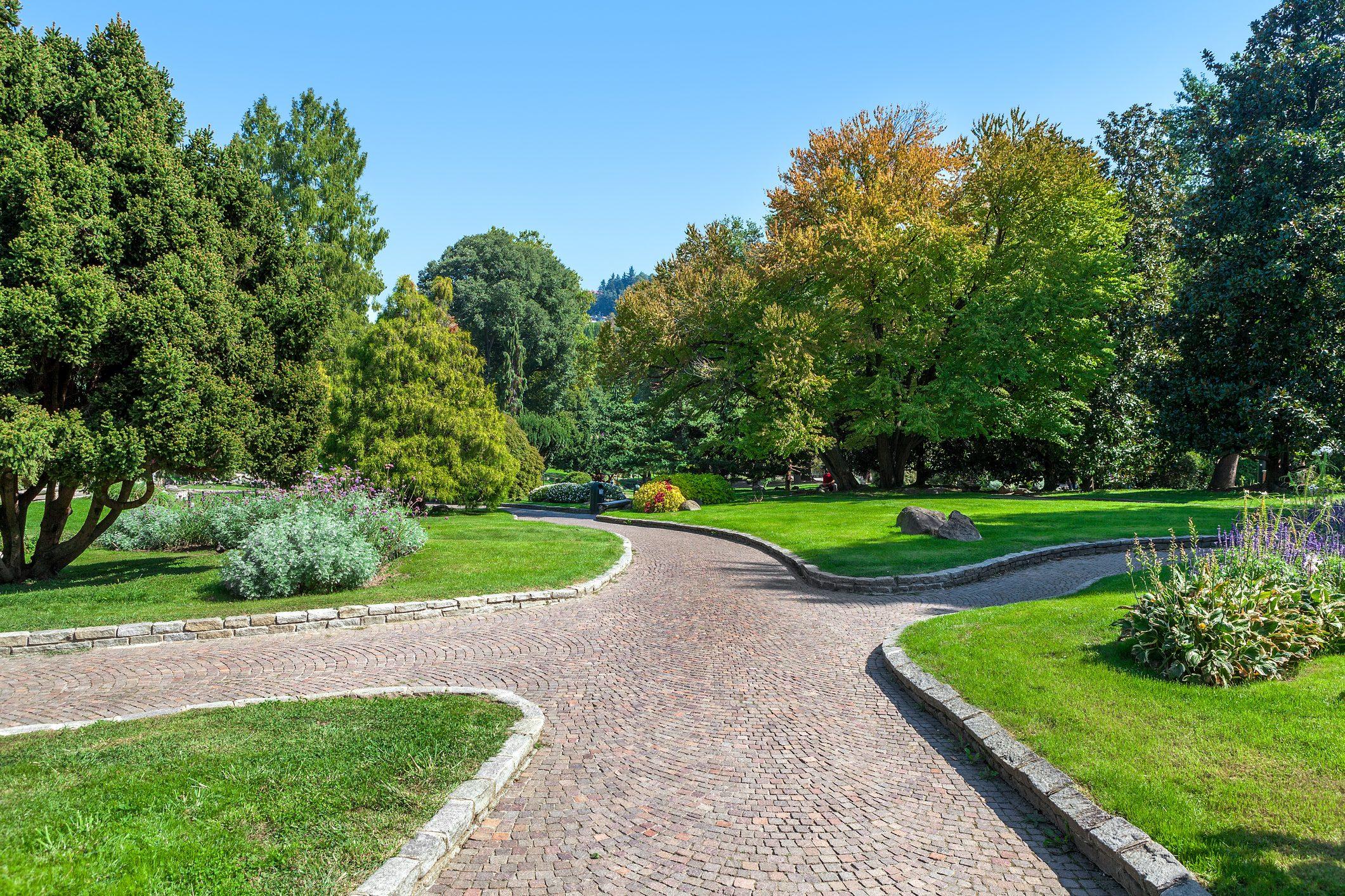Alberi Ornamentali Da Giardino quali alberi sono migliori per la città? | ohga!
