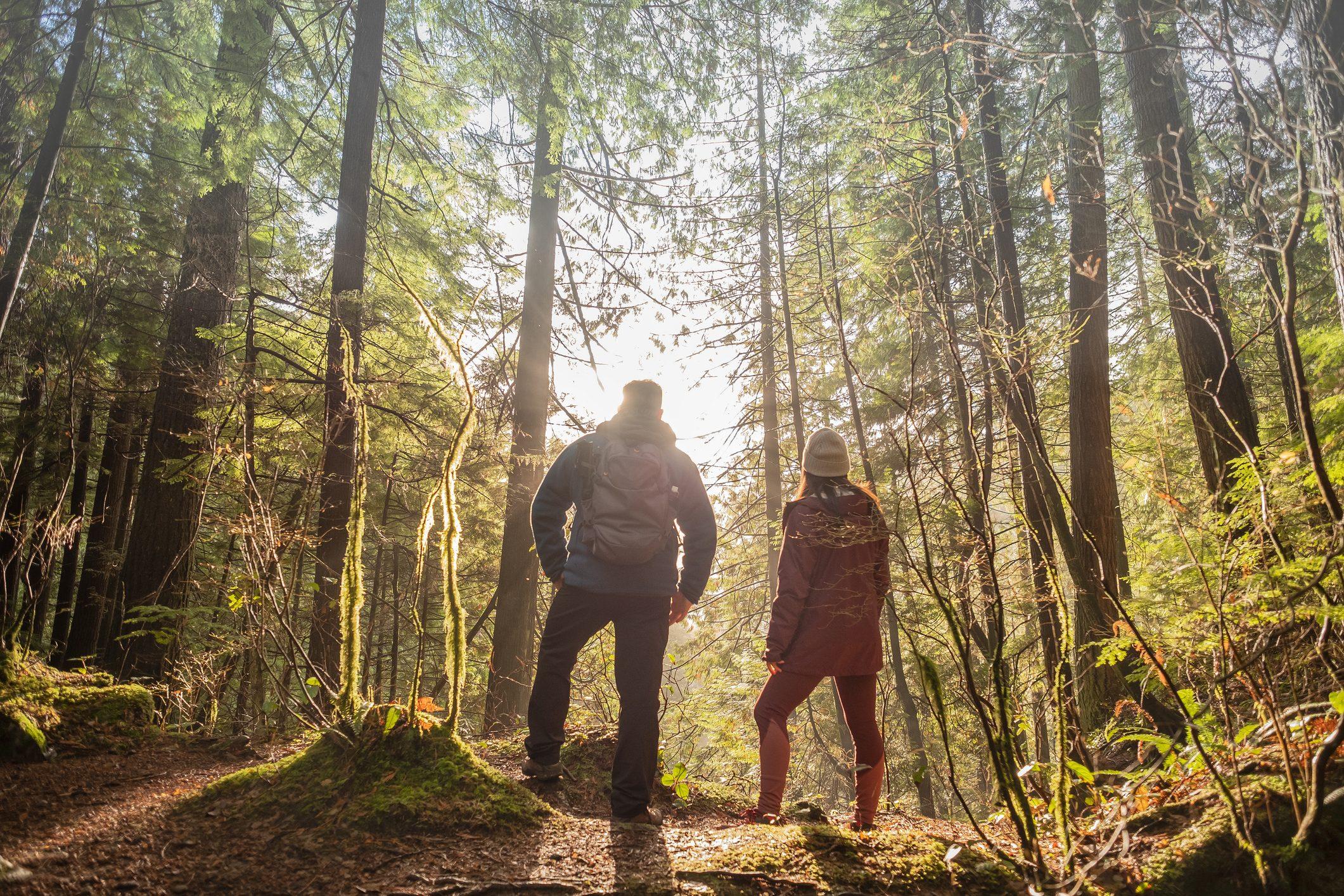 Forest bathing: cos'è e dove puoi praticarlo - Ohga!