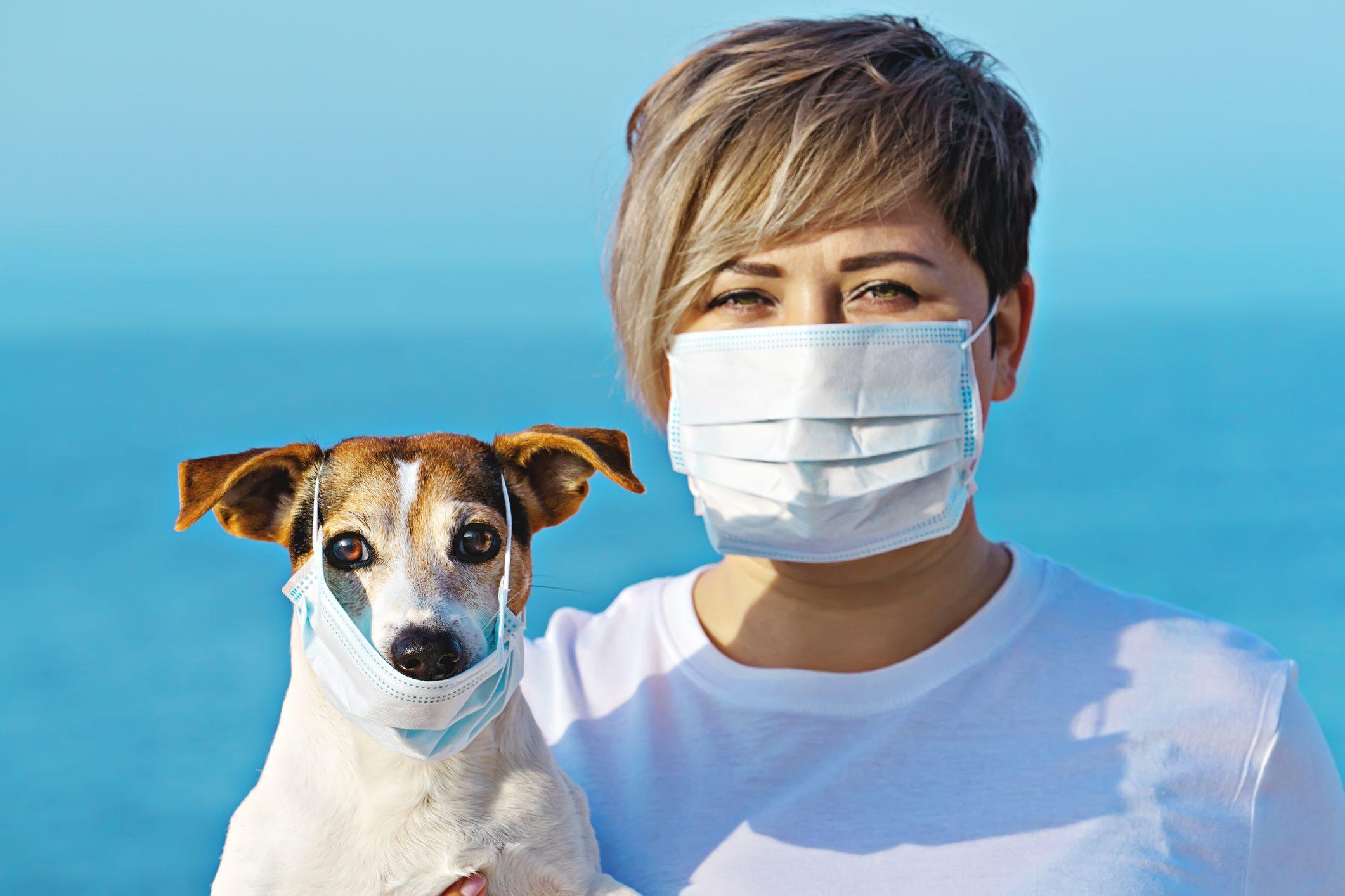 Domande Al Veterinario Cane coronavirus e animali domestici: la veterinaria ci spiega