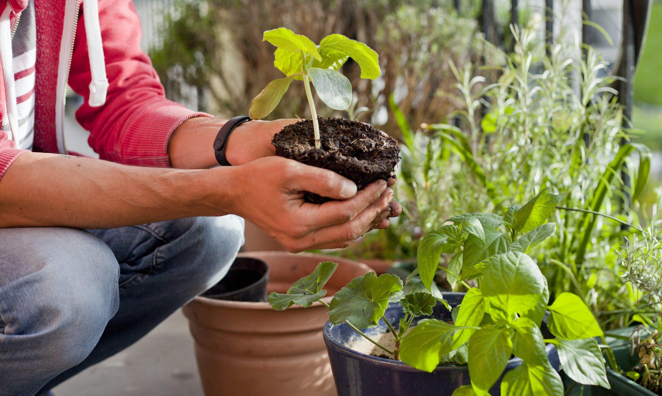 Come Coltivare Pomodori Sul Balcone come realizzare un orto sul balcone: gli attrezzi e i semi