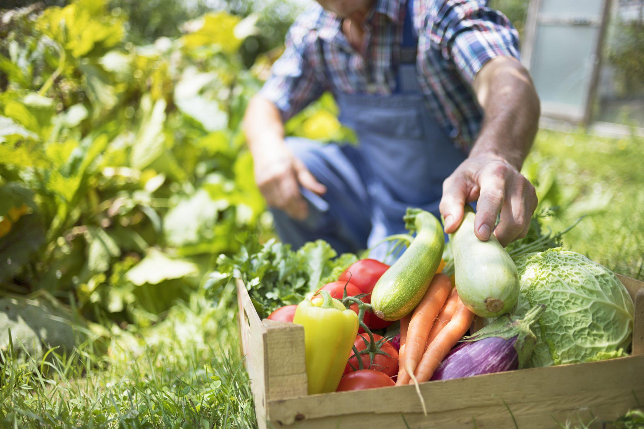 Fiori Da Piantare Nell Orto orto in casa in primavera: cosa piantare mese per mese | ohga!