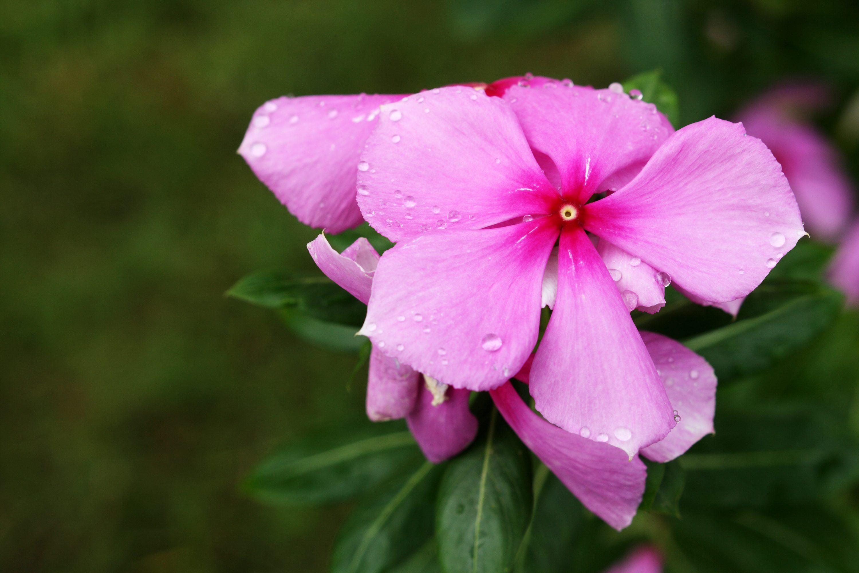 Fiori Da Balcone Ombra le 5 piante estive che non puoi non coltivare sul tuo