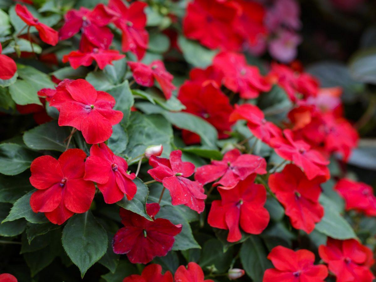 Piante Adatte Al Sole Diretto come coltivare i fiori di vetro e riempire di colori il tuo