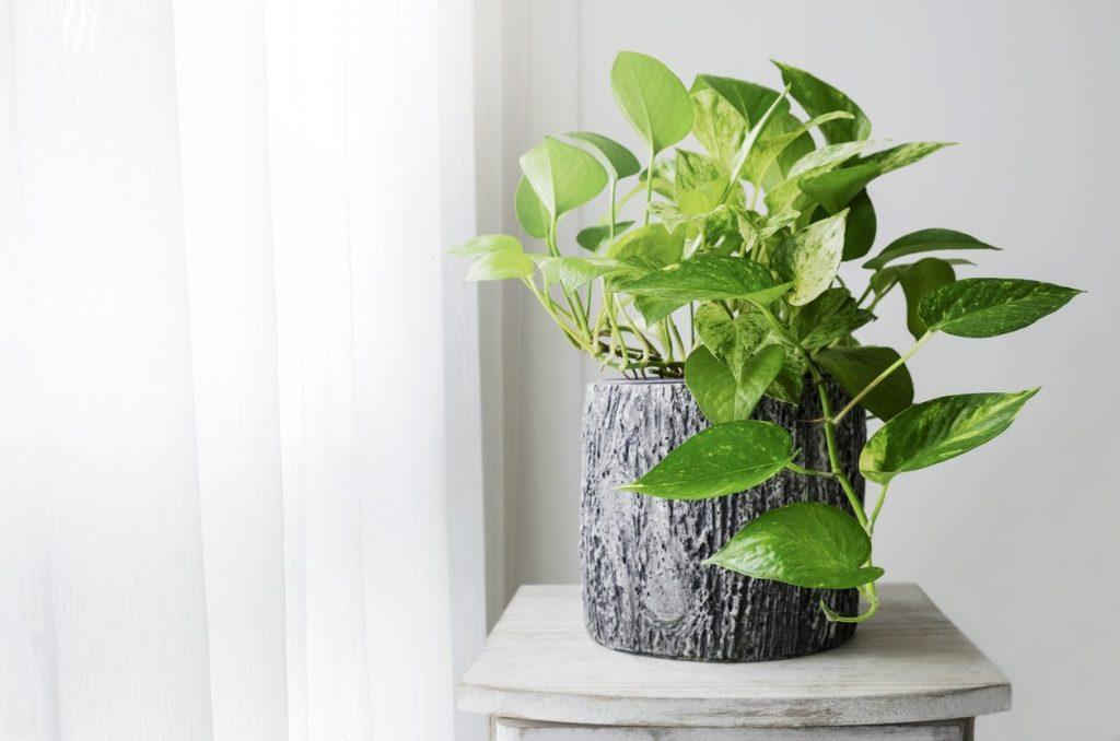 5 piante che dovresti tenere nella tua cucina   Ohga!