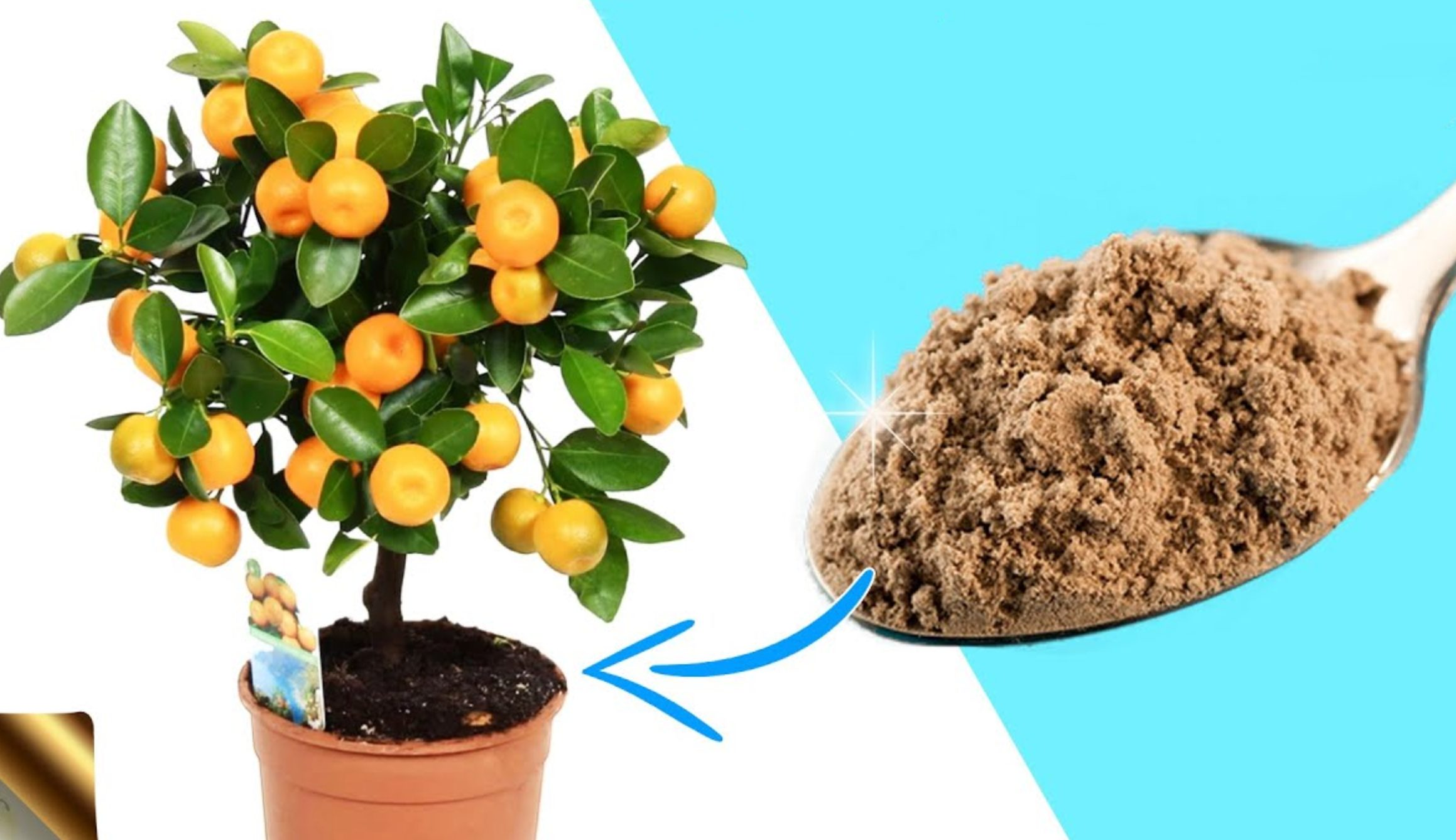 Foto Di Alberi Da Frutto alberi da frutto: regole da seguire per coltivarli | ohga!