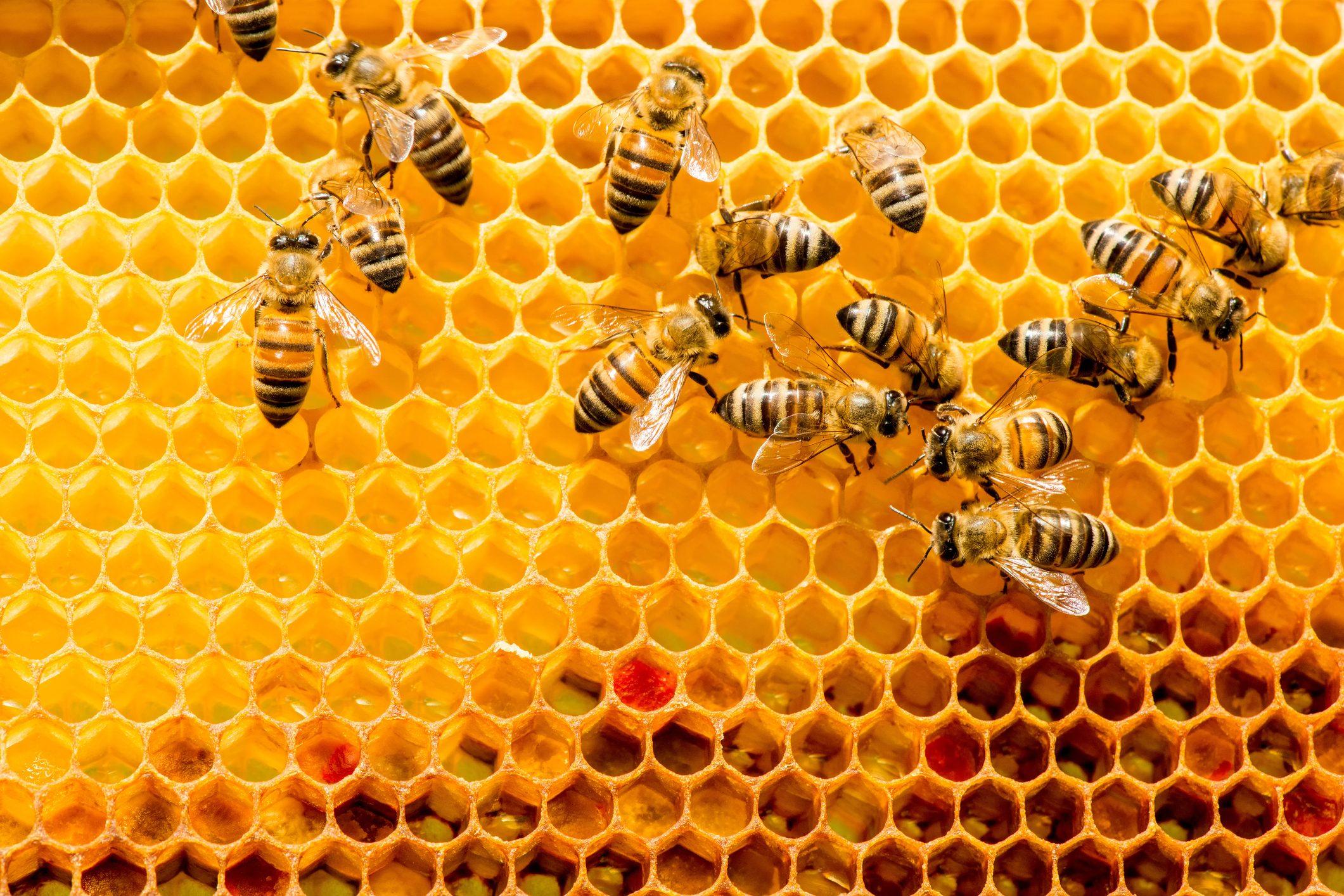 Come riconoscere se un miele è davvero puro   Ohga!