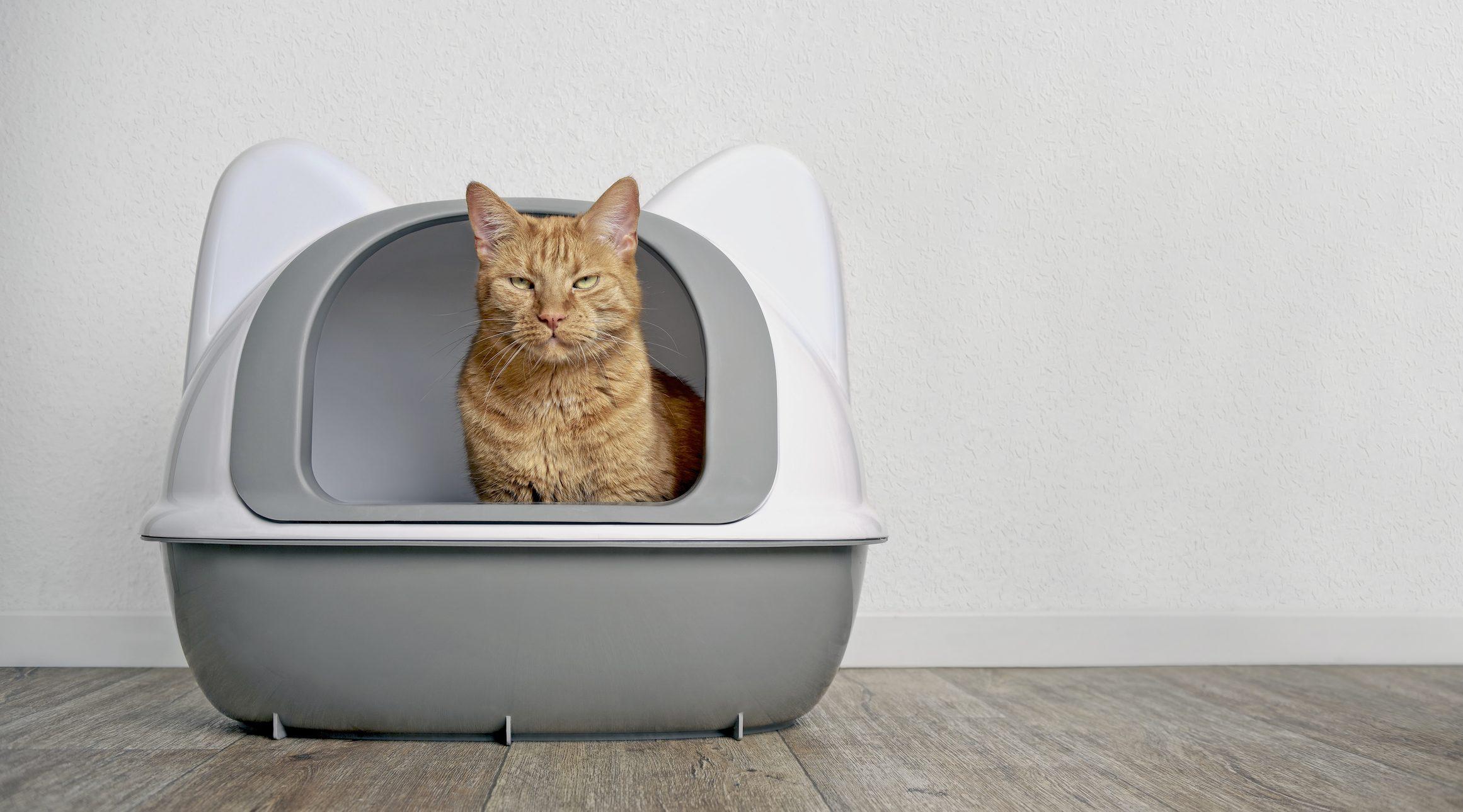 lettiera gatto