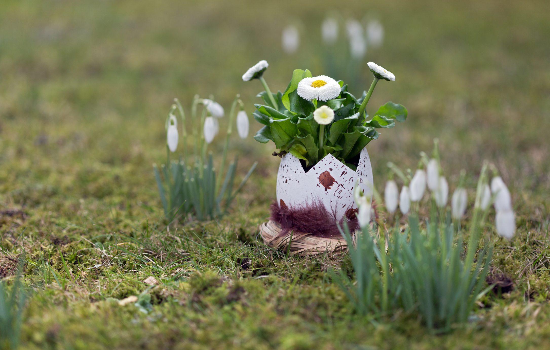regali pasqua porta piante riciclo