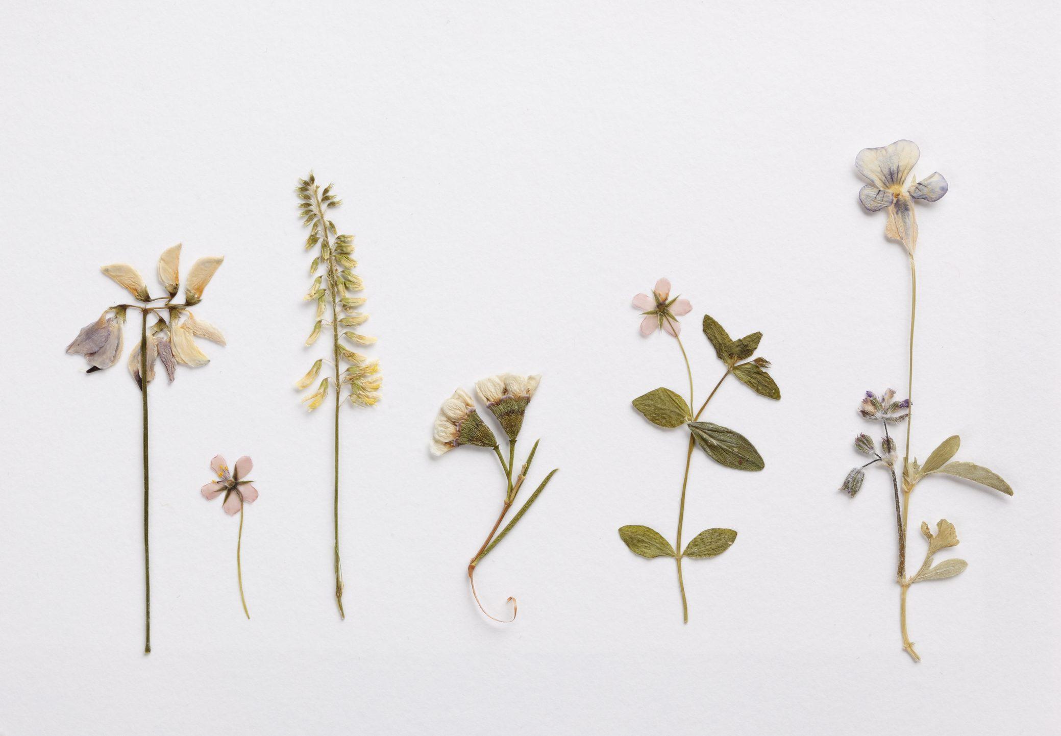 Ghirlanda pasquale fai da te fiori pressati