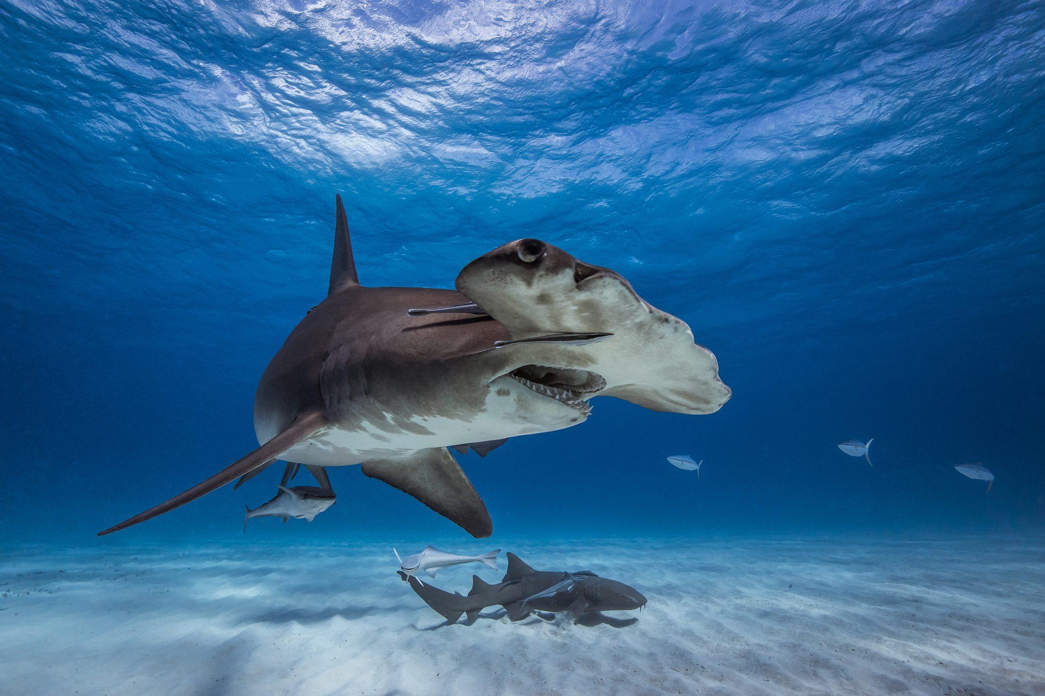 squalo-martello-cover