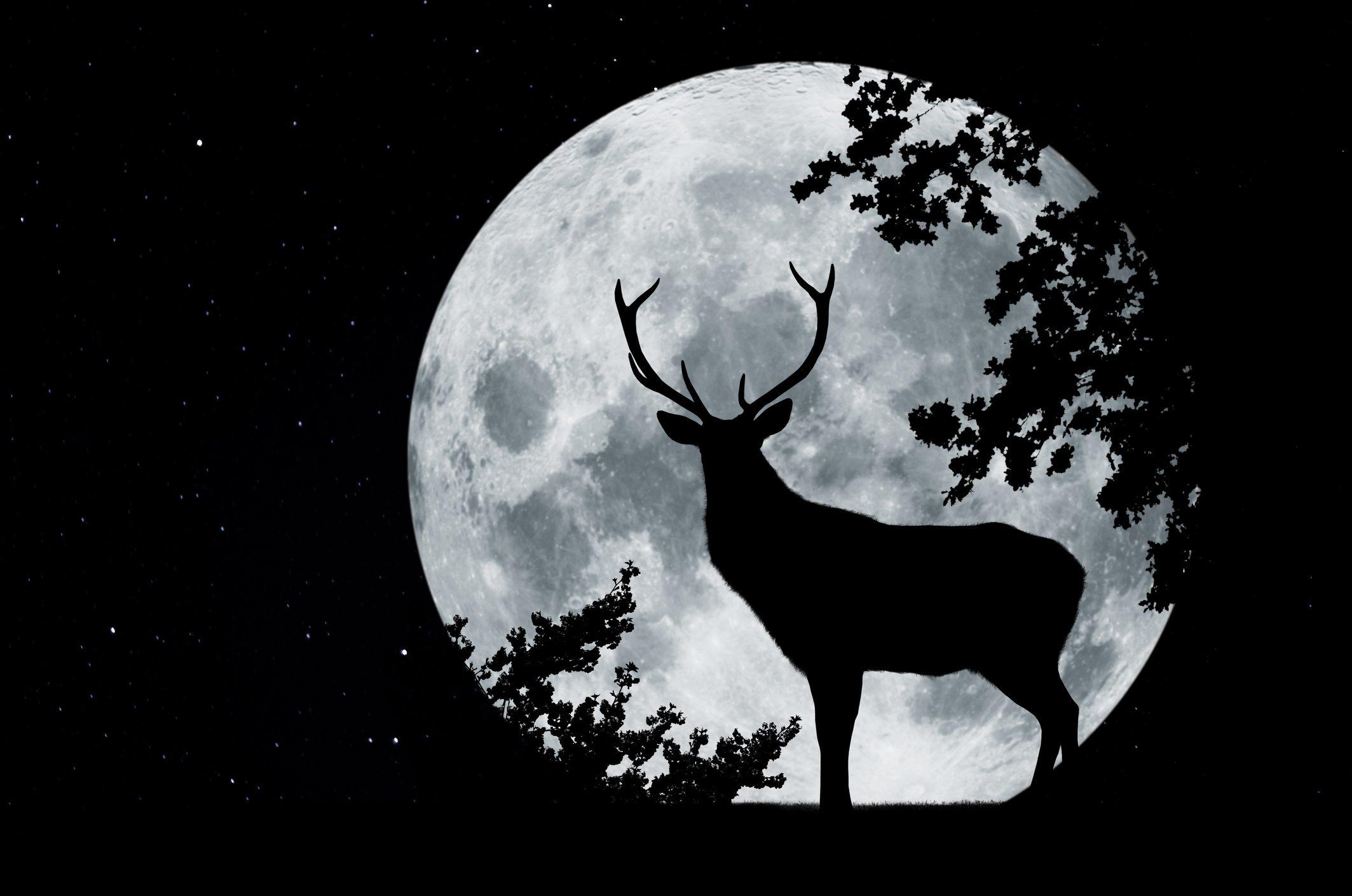 luna-piena-cervo-significato