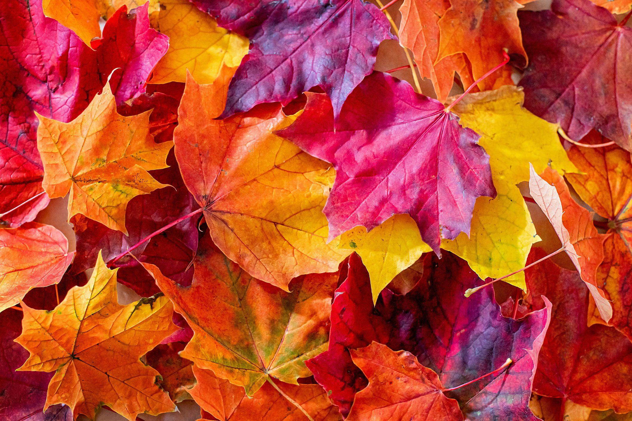 Lavoretto autunno foglia