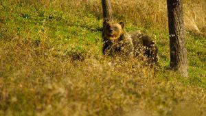 orso-marsicano-dove-vive